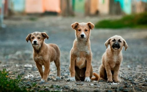 Three dogs in our Aftercare Program